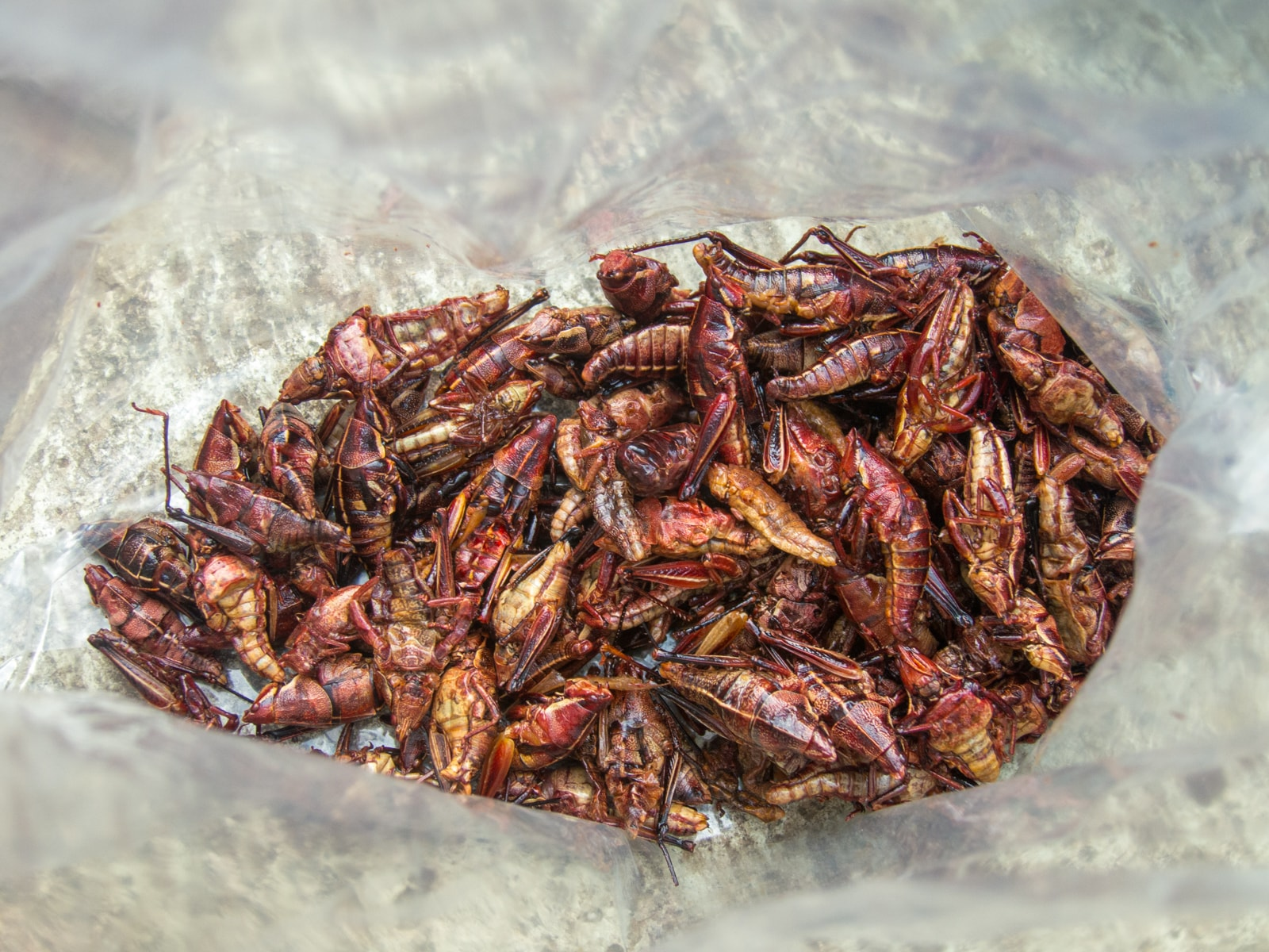 Chapulines (grasshoppers) are a typical Oaxaca food